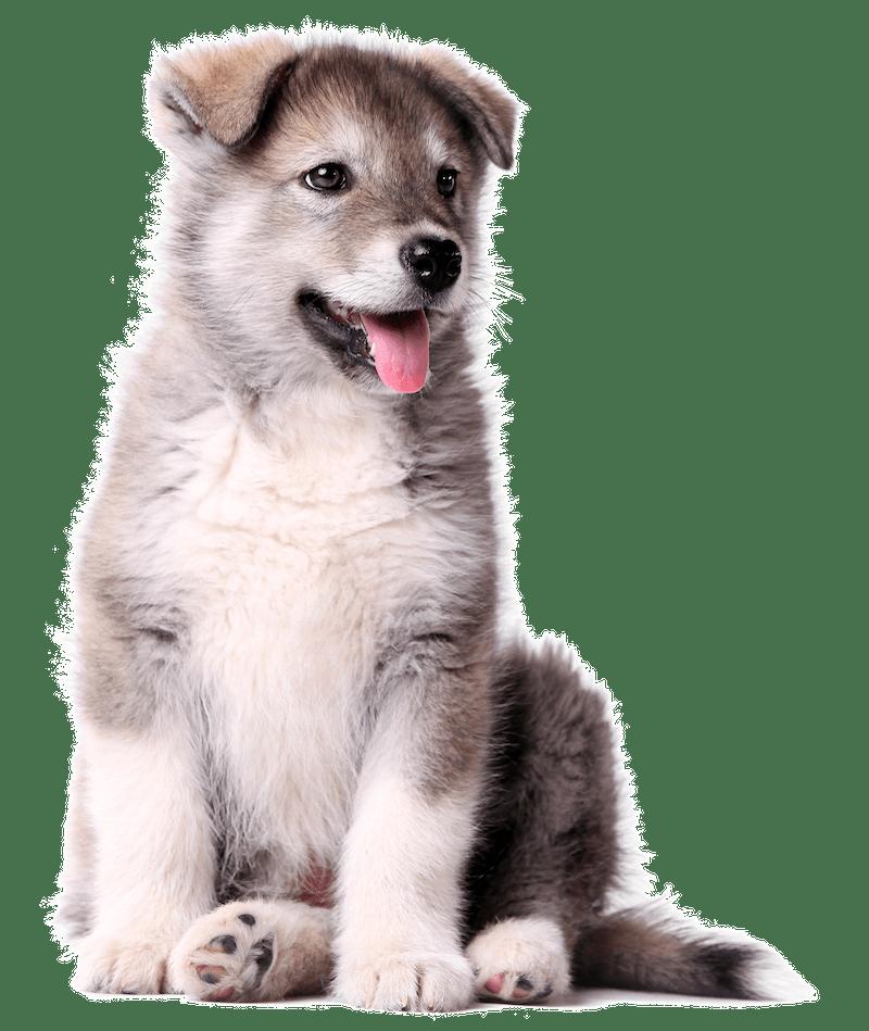 Indigenous Pet Treats Canada Shades of Gray